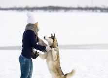 A menina em um tampão branco e em uns cães de puxar trenós Siberian Fotografia de Stock