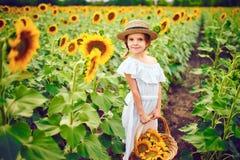 Menina em um vestido branco, um chapéu de palha com uma cesta completa dos girassóis sorrindo na câmera em um campo de imagens de stock