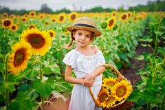 Menina em um vestido branco, um chapéu de palha com uma cesta completa dos girassóis sorrindo na câmera em um campo de fotos de stock royalty free