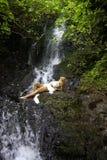 Menina em uma cachoeira tropical Imagens de Stock