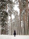 Menina em uma floresta do pinho entre as árvores grandes foto de stock