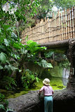 Menina em uma floresta húmida Fotos de Stock