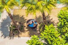 Menina em vadios do sol entre palmeiras perto da piscina imagem de stock royalty free