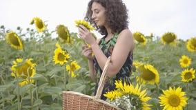 Menina encaracolado bonita que anda e que escolhe flores na cesta de vime grande no campo do girassol Conex?o com a natureza vídeos de arquivo