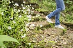 A menina está andando abaixo das etapas velhas cobertos de vegetação com o musgo e a grama Foto de Stock