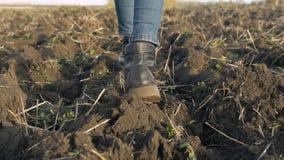 A menina está andando através do campo arado Os pés fêmeas estão andando na terra video estoque