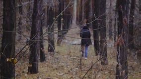 A menina está andando entre as árvores no tiro cinemático da floresta do outono, movimento lento caminhada no ar fresco, saudável filme