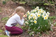A menina está aspirando a flor do narciso em um parque na mola Fotos de Stock Royalty Free