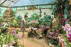 A menina está fotografando orquídeas Imagens de Stock Royalty Free