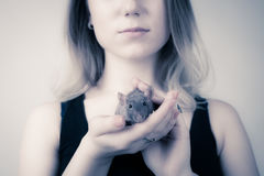 A menina está guardando um rato em suas mãos O rato olha a câmera Fotografia de Stock Royalty Free