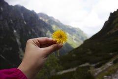 A menina está guardando uma flor amarela do dente-de-leão em suas mãos na perspectiva das montanhas imagem de stock royalty free