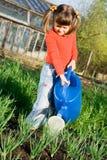 A menina está molhando no jardim vegetal dentro Fotos de Stock