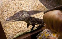 A menina está olhando a cabeça preta do crocodilo no jardim zoológico Fotos de Stock