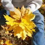 A menina está realizando nas mãos um o grupo das folhas de outono amarelas foto de stock