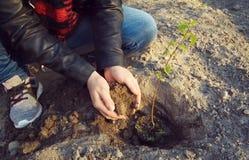 A menina est? plantando uma ?rvore nova foto de stock