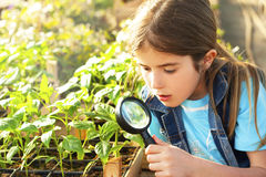 a menina explora a natureza Fotografia de Stock Royalty Free