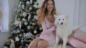 A menina feliz acaricia o cão do Samoyed do Xmas na cama na manhã na árvore de Natal bonita grande do fundo vídeos de arquivo