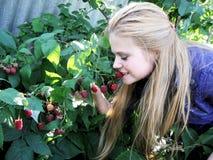 A menina feliz come framboesas maduras no jardim Foto de Stock