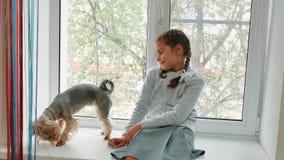 Menina feliz da criança com seu peitoril de assento da janela do cão no por do sol a menina é jogada com um yorkshire terrier do  vídeos de arquivo