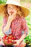 A menina feliz da criança em morangos da colheita do vestido do chapéu e da manta no país ensolarado anda Imagem de Stock