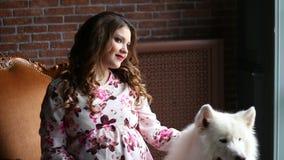 A menina grávida bonita senta-se em uma cadeira e pet seu cão branco grande filme