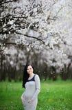 Menina grávida no fundo do abricó de florescência grávido Foto de Stock Royalty Free