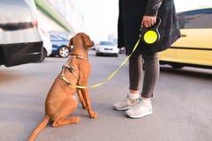 a menina guarda um cão bonito em uma trela ao andar através das ruas da cidade fotos de stock royalty free