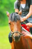 A menina japonesa equestre fotos de stock royalty free
