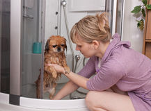 A menina lava um cão Fotos de Stock Royalty Free