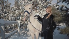 Menina loura bonito do retrato com o cavalo branco do puro-sangue perto da cerca Jovem mulher que joga com seu cavalo branco fora video estoque