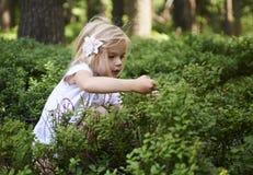 Menina loura da criança que escolhe bagas frescas no campo do mirtilo na floresta Fotos de Stock Royalty Free