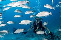 Menina loura do mergulhador da beleza que olha o ao nadar debaixo d'água fotografia de stock