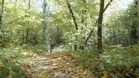 A menina loura está correndo através do parque do outono O corredor começa correr no parque Movimento lento video estoque