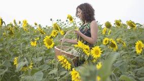 Menina magro adorável que anda e que escolhe flores na cesta de vime grande no campo do girassol Conex?o com a natureza vídeos de arquivo