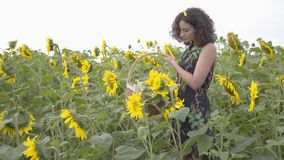 Menina magro bonito que anda e que escolhe flores na cesta de vime grande no campo do girassol Conex?o com a natureza filme