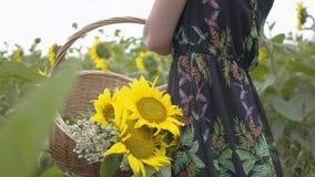 Menina magro irreconhecível que anda e que escolhe flores na cesta de vime grande no campo do girassol Conexão com filme