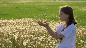 A menina mantém-se nas sementes ausentes dos sopros das sementes do dente-de-leão das mãos que voam no vento backlighting bonito  vídeos de arquivo