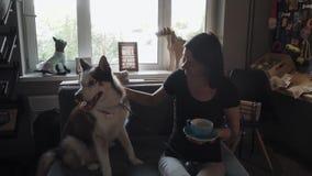Menina moreno com o cão de puxar trenós no sofá video estoque