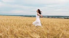 Menina moreno da beleza com o cabelo longo saudável que gira e que ri exterior no campo de trigo dourado Apreciando a natureza no vídeos de arquivo