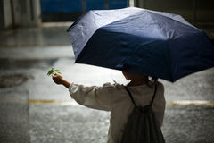 Menina na chuva Fotos de Stock Royalty Free