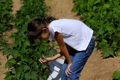 Menina na exploração agrícola Fotos de Stock