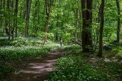 A menina na floresta Fotografia de Stock Royalty Free