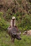 Menina na parte traseira de seu búfalo Imagens de Stock Royalty Free