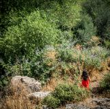 Menina na posição vermelha do vestido no campo cercado por plantas e por roc imagem de stock royalty free