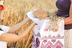 Menina no campo de trigo Foto de Stock Royalty Free