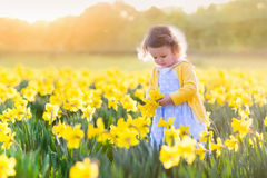 Menina no campo do narciso amarelo Imagens de Stock