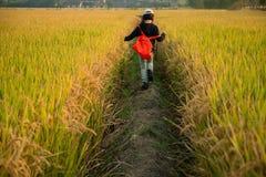 Menina no campo do outono Foto de Stock