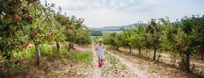A menina no chapéu anda com a maçã doce no pomar de maçã foto de stock