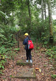 Menina no hike trekking da natureza na floresta Imagem de Stock Royalty Free