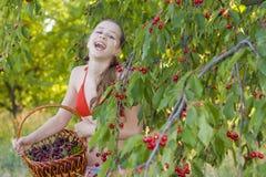Menina no jardim com uma cesta da cereja doce Foto de Stock Royalty Free